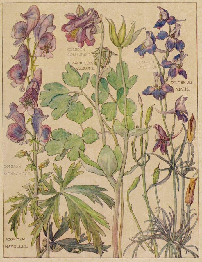 Weinlese-Aquarell Wildflowers - Naturgeschichte - Botanik-Illustration - Zeitschriften-Papier - Einklebebuch-Digital-Collagen-Bes stock abbildung