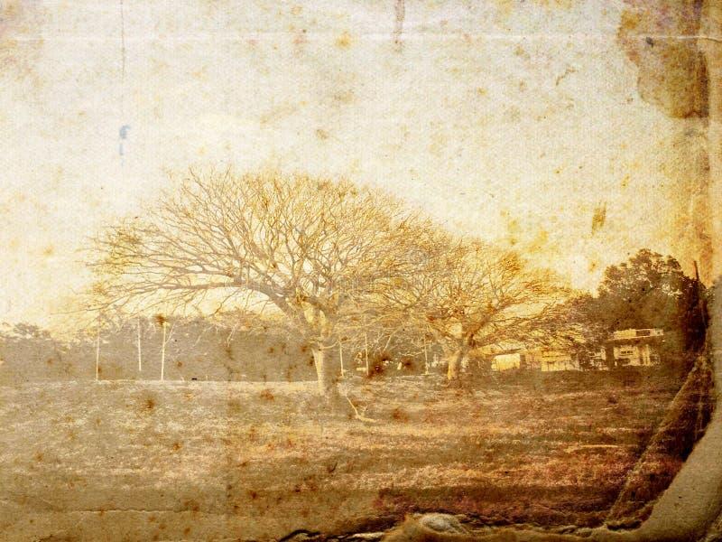 Weinlese-Bäume stockfotografie