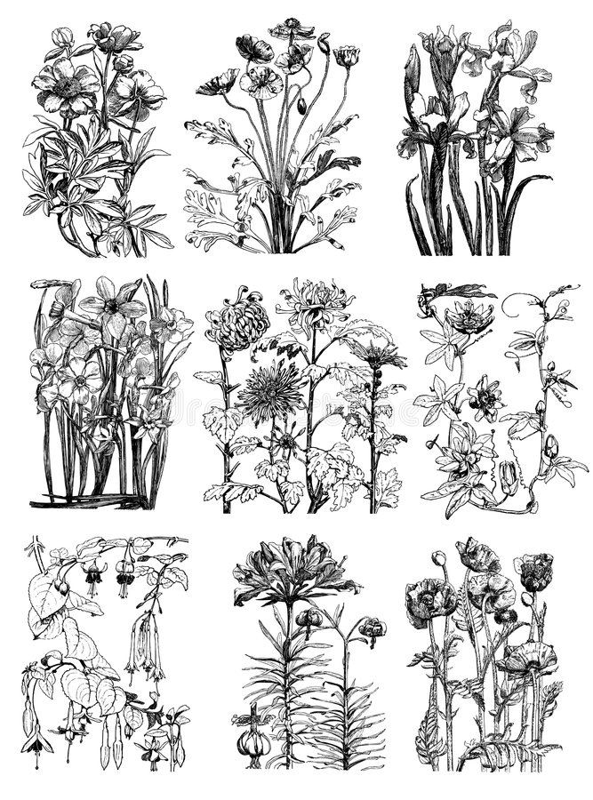 Weinlese-botanische Blumen-mit Blumenzeichnungen lizenzfreie abbildung