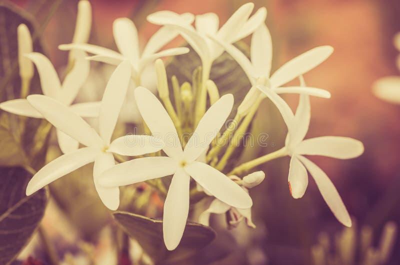 Weinlese der weißen Blume lizenzfreies stockfoto
