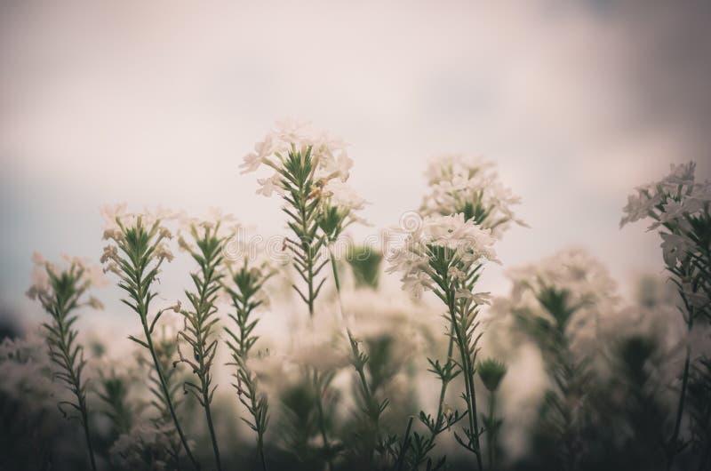 Weinlese der weißen Blume stockbild