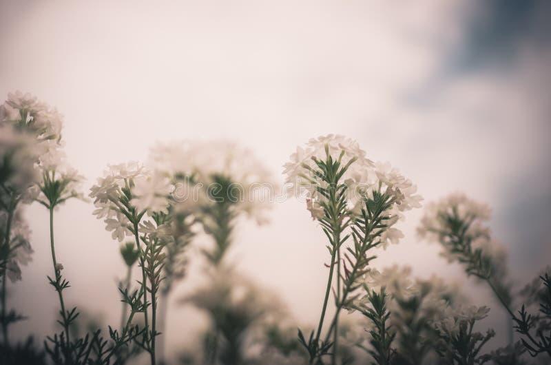 Weinlese der weißen Blume stockfoto