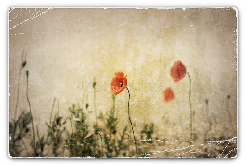 Weinlese-Fotografie von Mohnblumen auf dem Gebiet lizenzfreie stockfotos
