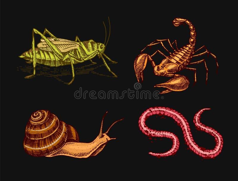 Weinlese-Insekten Haustiere im Haus Skorpions-Schnecke, Wurm-Heuschrecken Gravierte Hand gezeichnete alte einfarbige Skizze für W lizenzfreie abbildung