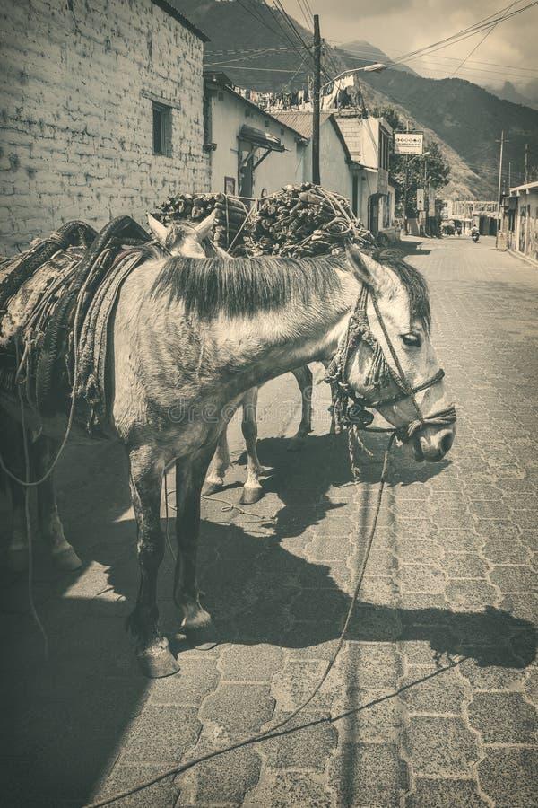 Weinlese-ländliche Szene in Guatemala stockbilder