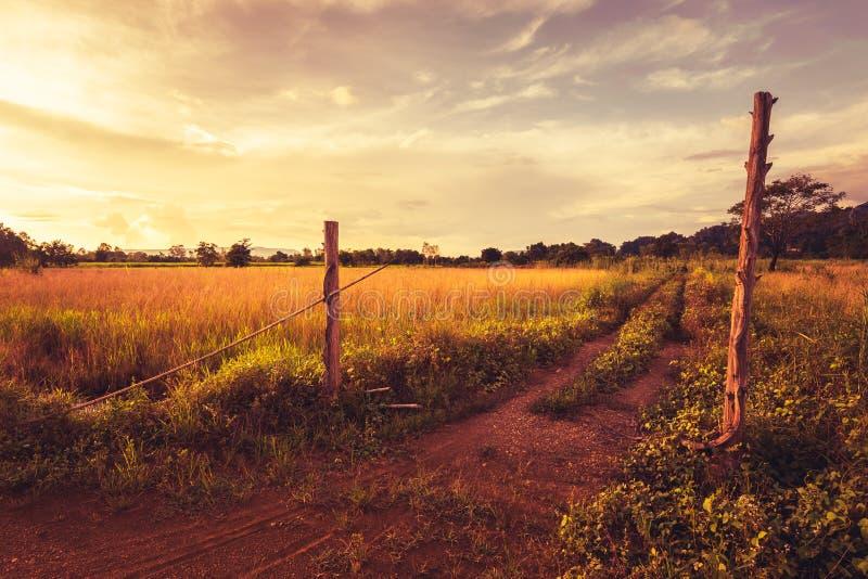 Weinlese-Landschaft an verlassenem Bauernhof lizenzfreies stockbild