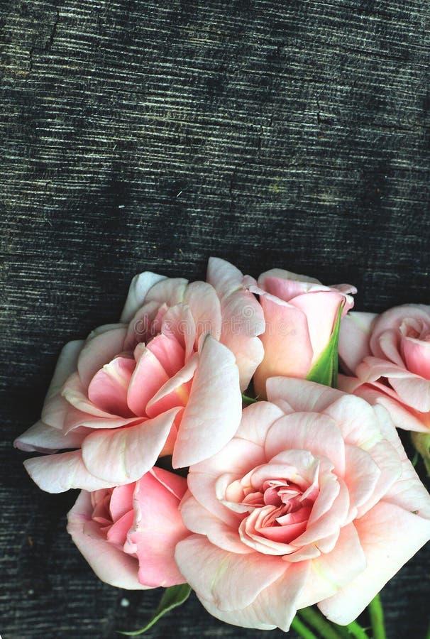 Weinlese-rosa Rosen stockfoto