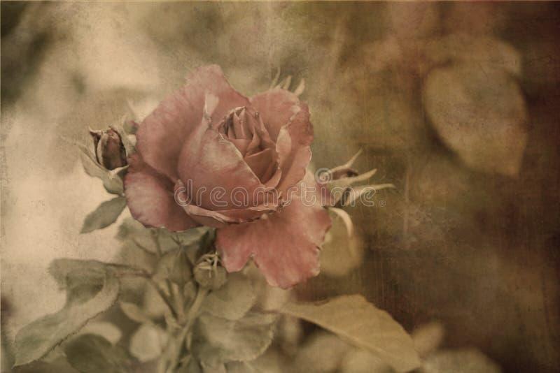 Weinlese-Rosen-Postkarte stockbild