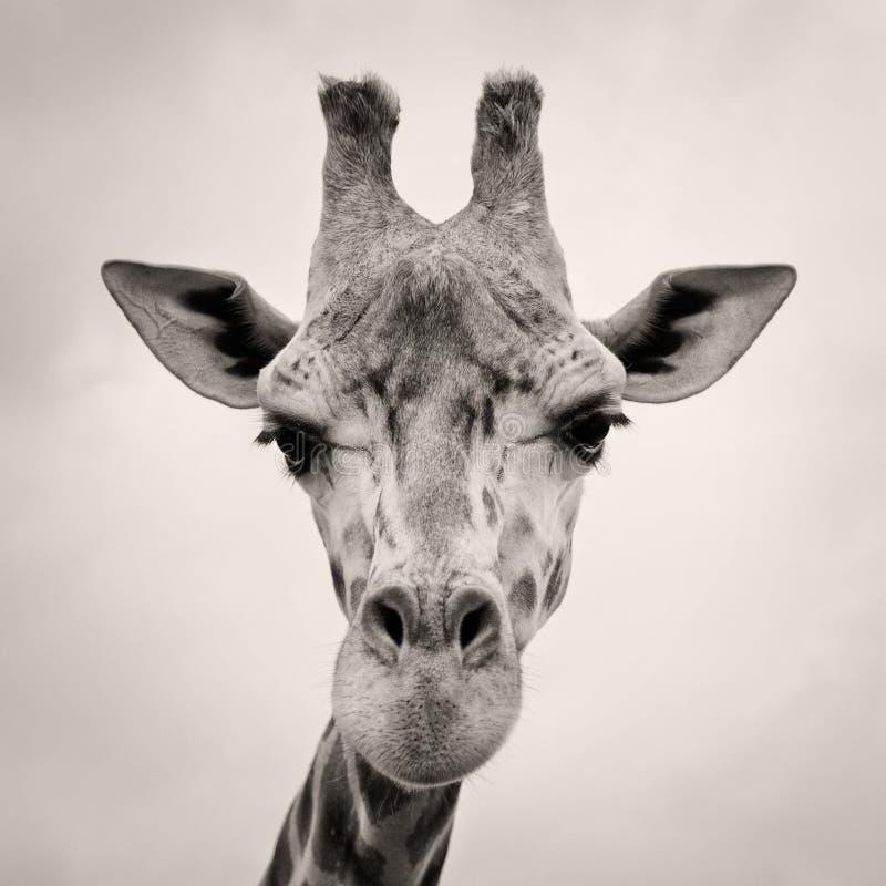 Weinlese Sepia tonte Bild eines Giraffe-Kopfes lizenzfreie stockfotos