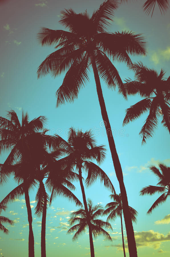 Weinlese-tropische Palmen lizenzfreie stockfotos