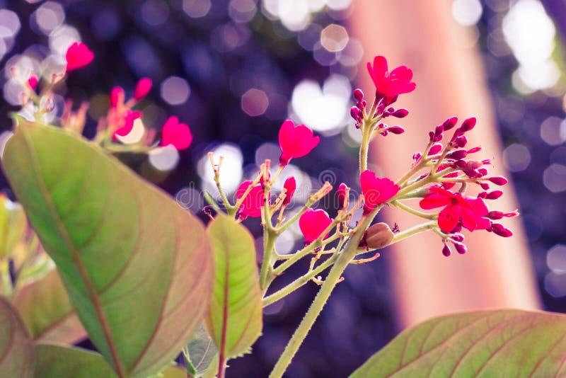 Weinlese wenig Pastellfarbe der roten Blume zum kreativen Muster lizenzfreies stockbild