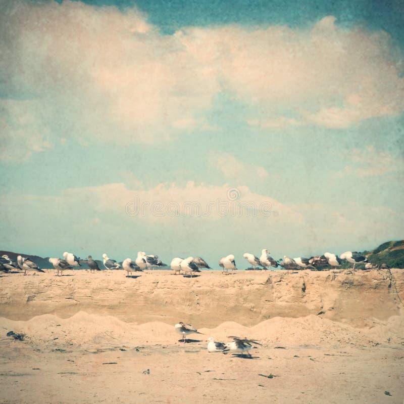 Weinleseart-Strandabbildung mit Seemöwen lizenzfreies stockbild