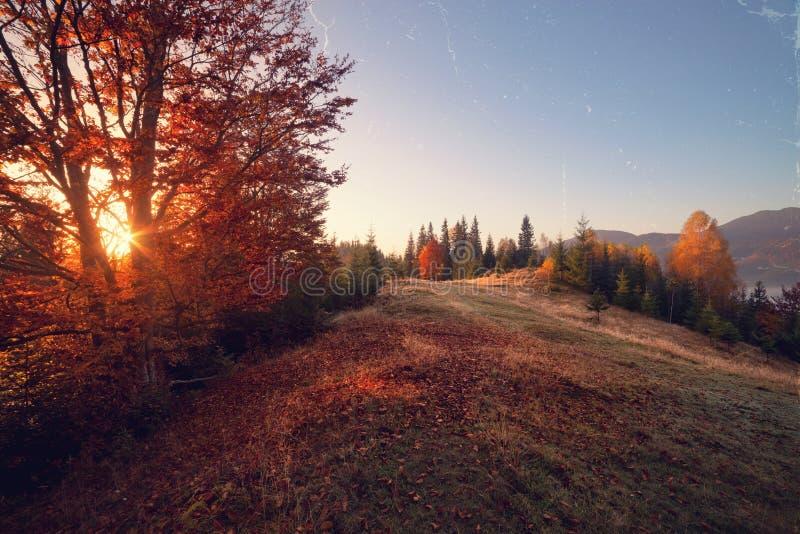 Weinleseartfoto des sonnigen Herbsttages stockbilder