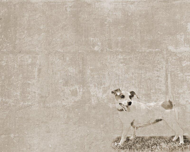 Weinlesebeschaffenheit mit einem kleinen Hund lizenzfreie stockfotos