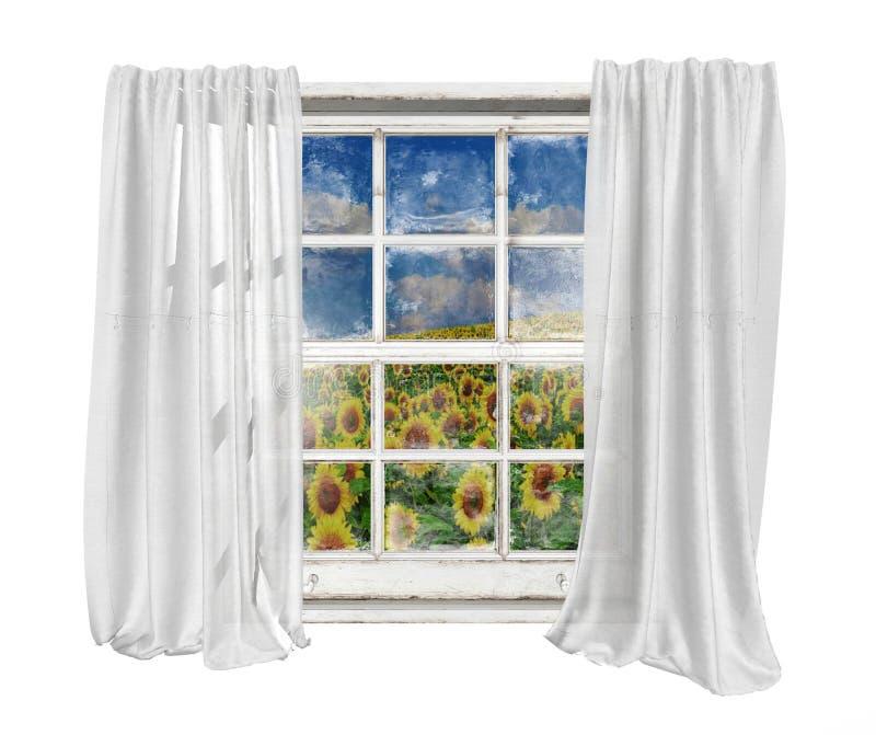 Weinlesefenster mit weißen Vorhängen lokalisierte das Sehen des Sonnenblumenfeldes stockfoto
