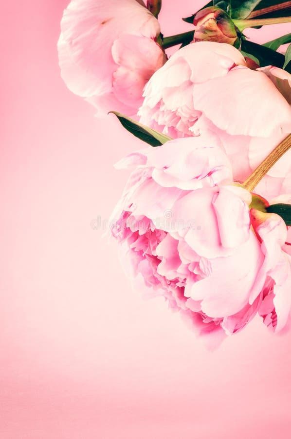 Weinlesehintergrund mit rosa Pfingstrosen lizenzfreies stockfoto