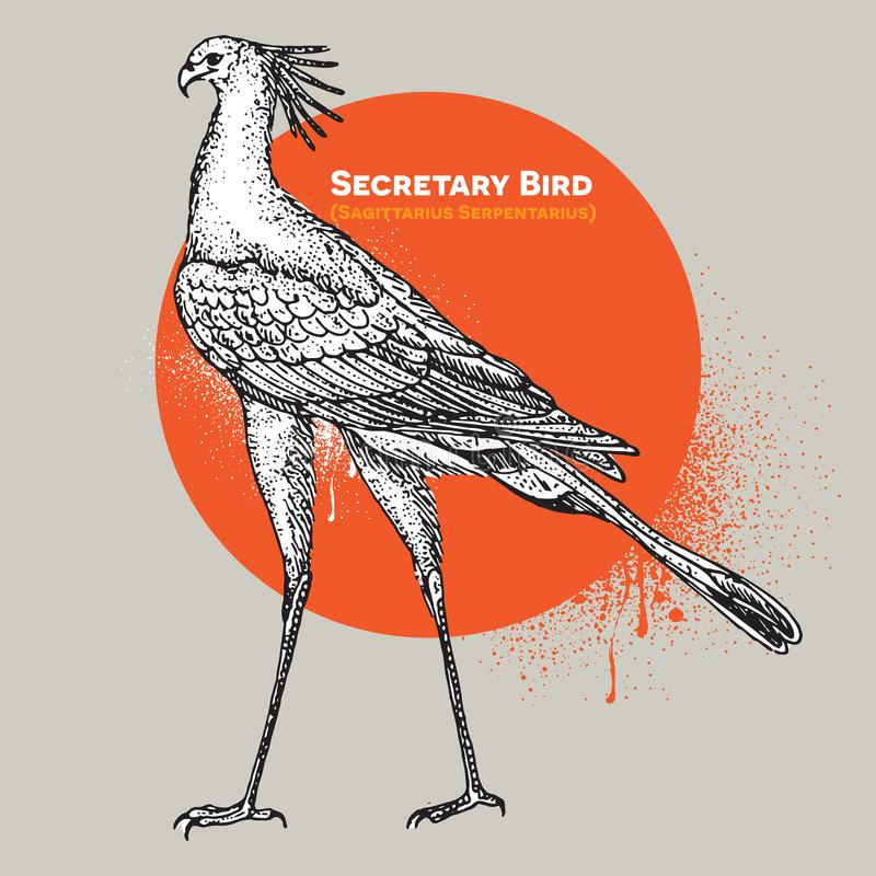 Weinlesevektorstich eines einzelnen Sekretärvogels lizenzfreie abbildung
