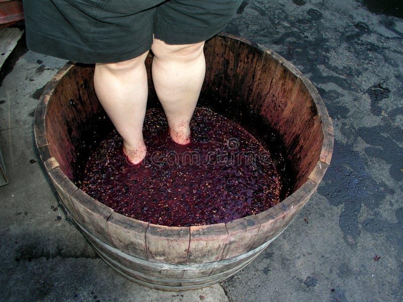 Weinproduktion stockbilder