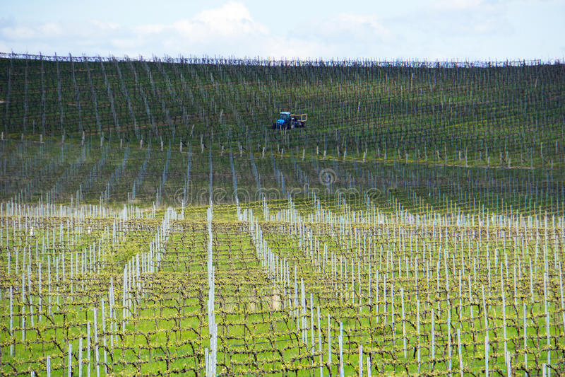 Weinreben, die für das Wachsen in Australien mit Landwirtschaftstraktor, Wolken, Schatten und Himmel im Hintergrund vorbereitet w lizenzfreie stockbilder