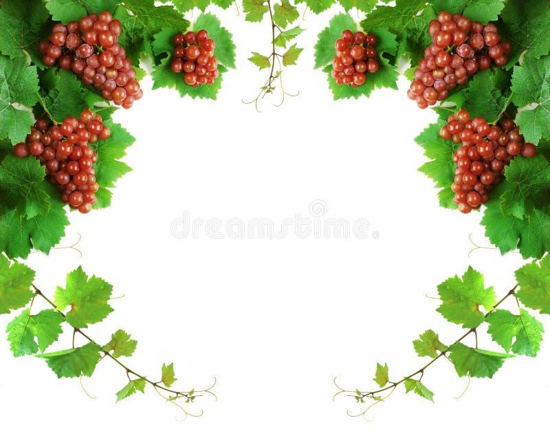 Weinstockdekorationrand stockbilder