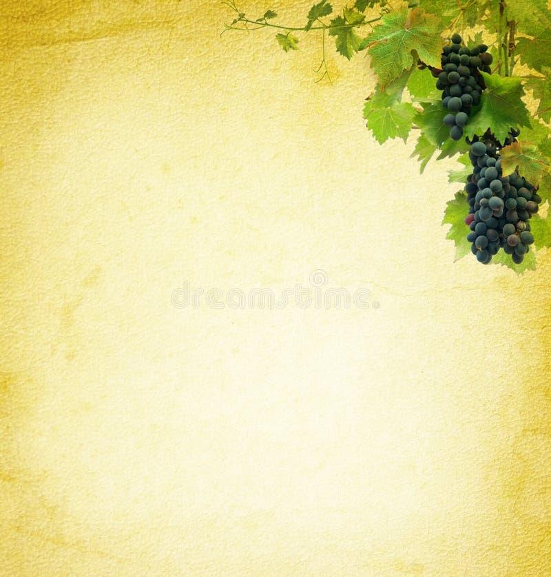 Weinstockhintergrund lizenzfreie abbildung