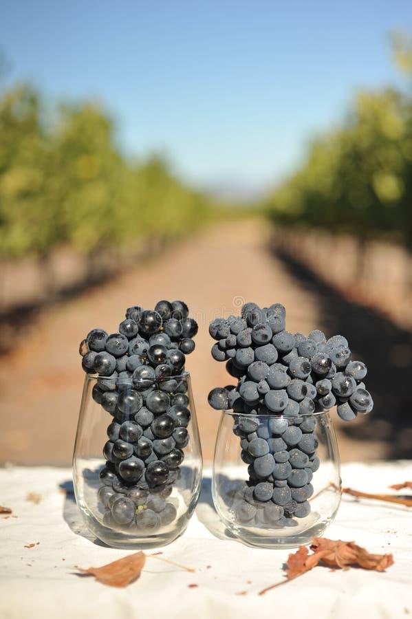 Weintrauben in einem Glas zu früh lizenzfreies stockbild