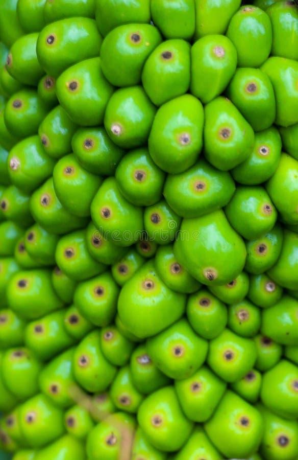 Vibrant green stock image
