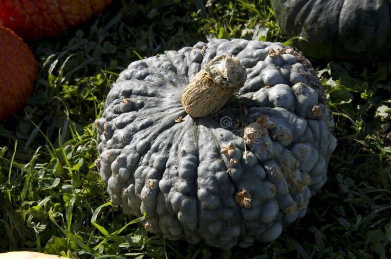 Weird pumpkin royalty free stock photos