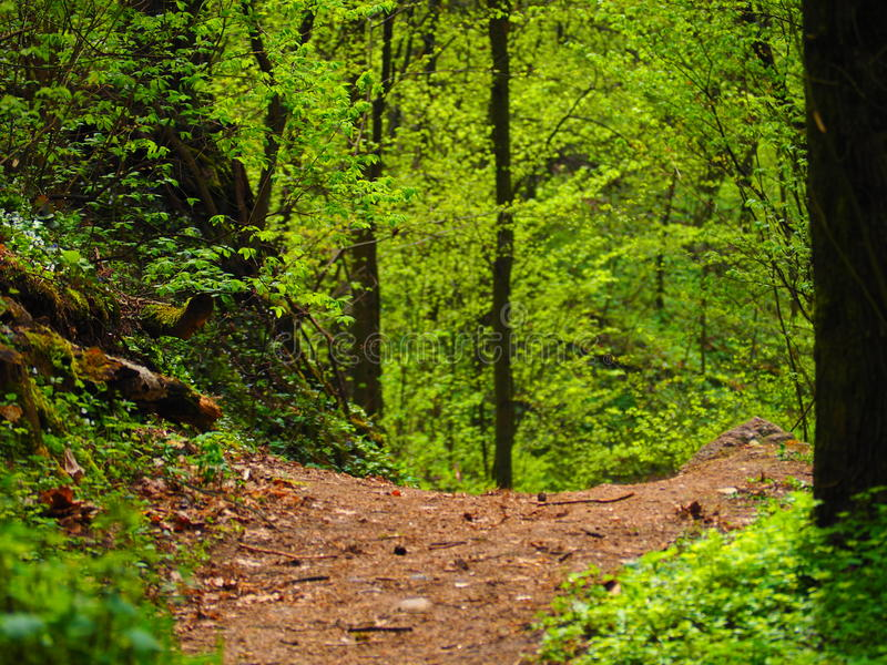 Weise unten im Wald KaroliniÅ-¡ kiÅ ³ Landschaftsreserve lizenzfreies stockfoto