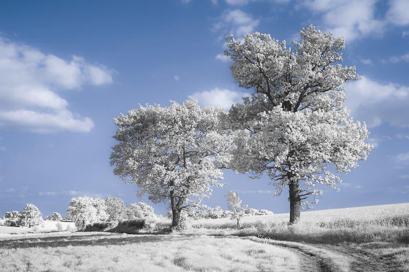 Weise zu den Bäumen lizenzfreie stockfotografie