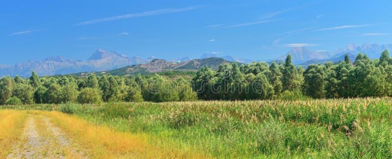 Weise zu Sommer sonnigen Alpen, Provence, Frankreich lizenzfreie stockbilder