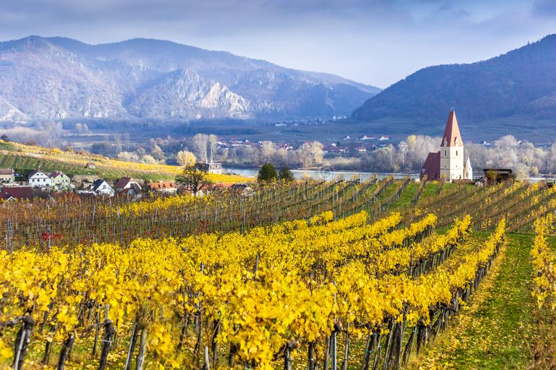 Weissenkirchen. Wachau valley. Lower Austria. Autumn colored leaves and vineyards. royalty free stock images