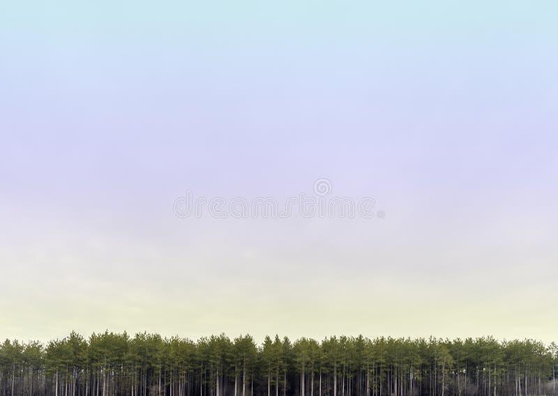 Weit färbte offener Pastell skyscape mit Linie von hohen Kiefern a lizenzfreies stockfoto