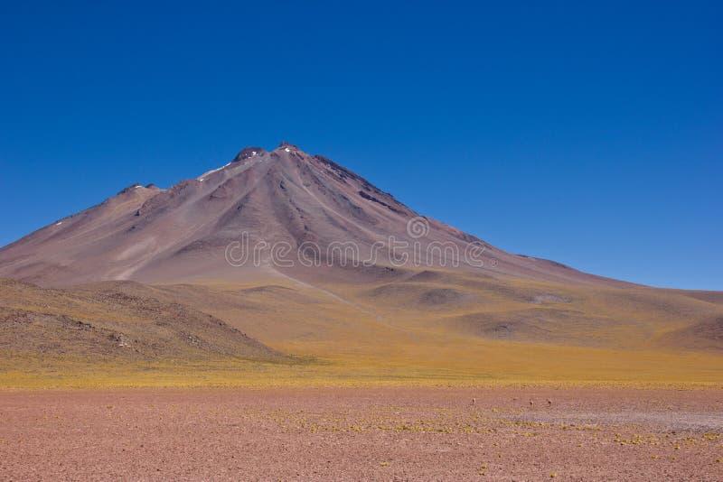 Weite Ansicht des Lamas oder des Guanaco in Atacama vor Berg stockfotografie