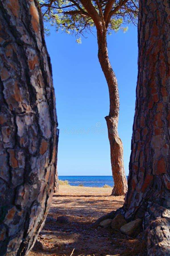 Weiter Strand hinter den Bäumen lizenzfreie stockfotos