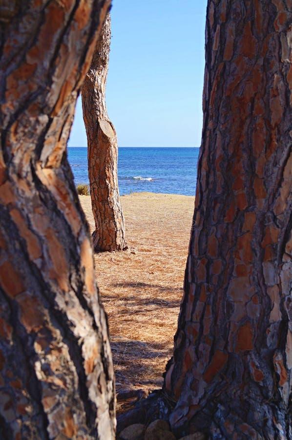 Weiter Strand hinter den Bäumen stockbilder