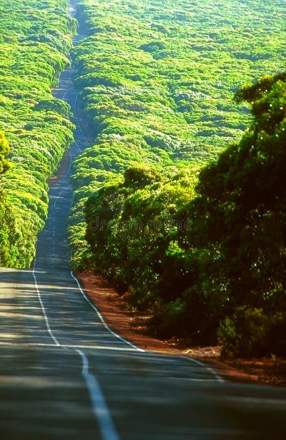 Weiter Weg durch australischen Wald stockfotografie