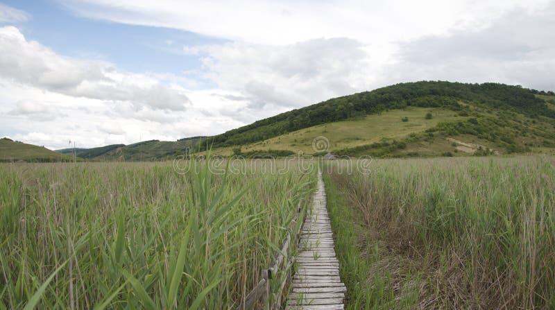 Weites pavillion und Holzbrücke durch die natürliche Reedreserve von sic stockfoto