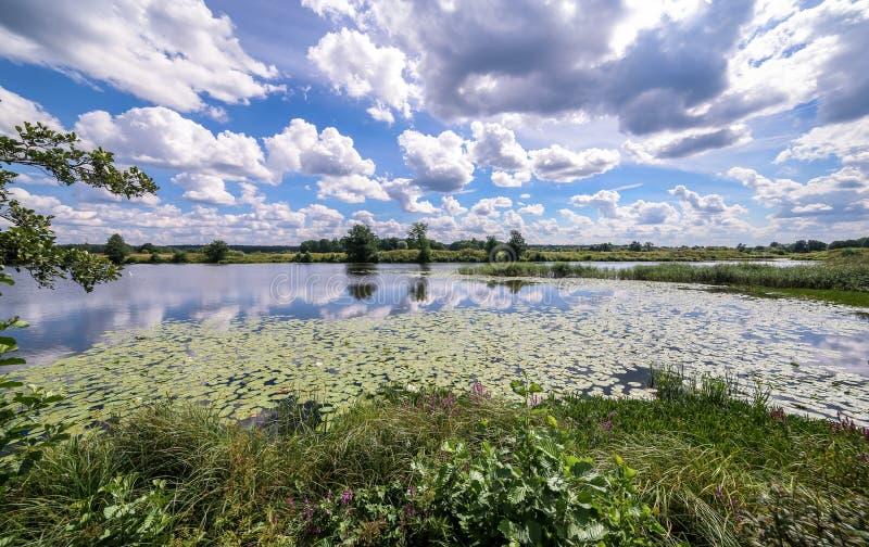 Weitwinkelansicht eines Sommersumpfs und der Wolkenreflexionen im Wasser unter gelben Seerosen stockbilder