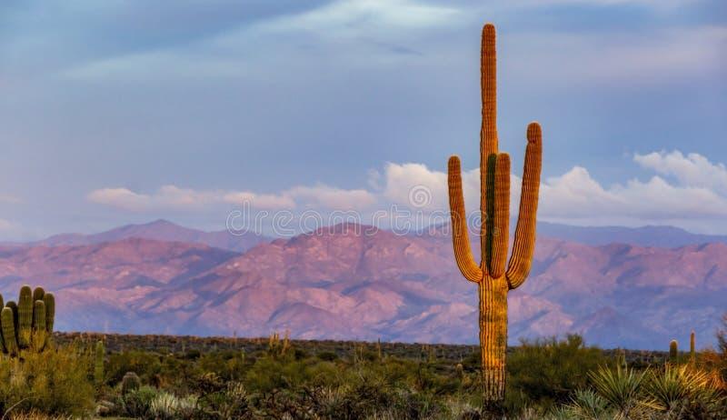 Weitwinkellandschaftssonnenuntergang-Bild des einzigen Kaktus mit Bergen stockfotos