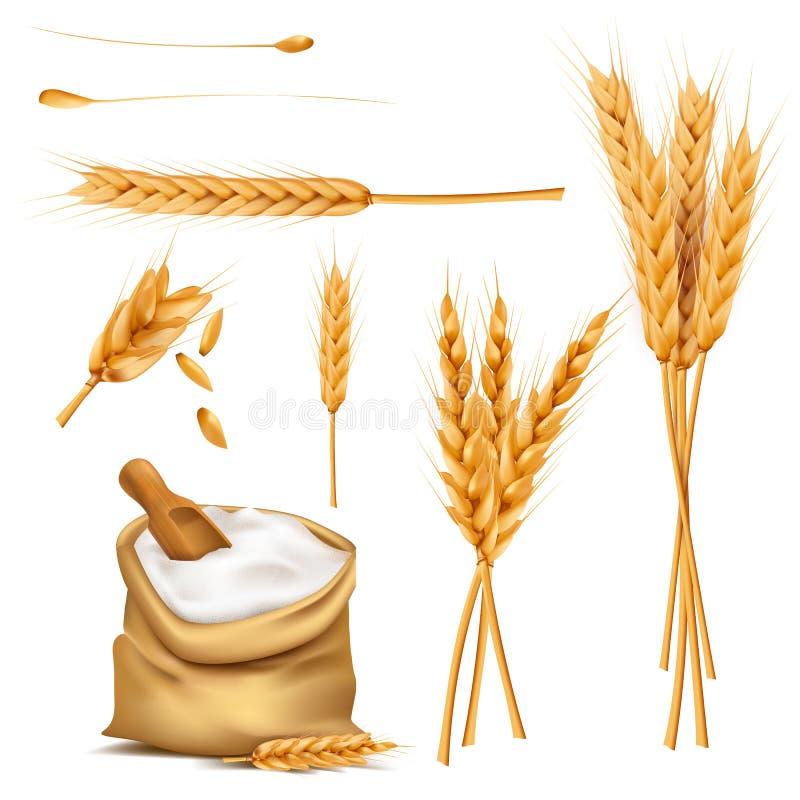 Weizenähren, Körner und Mehl im Sackvektorsatz stock abbildung