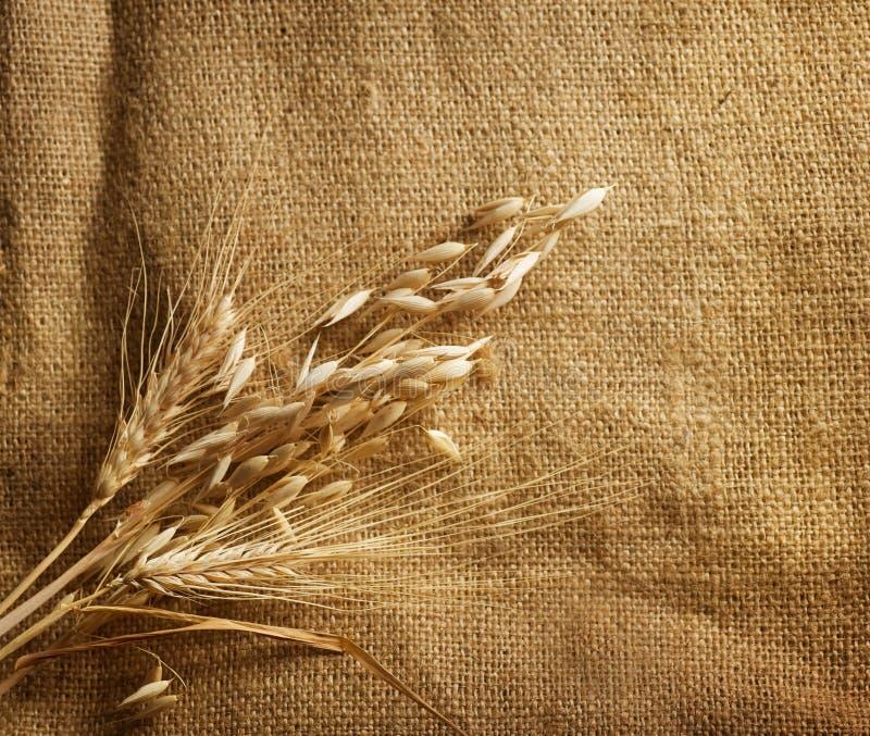 Weizen auf Leinwand lizenzfreies stockfoto
