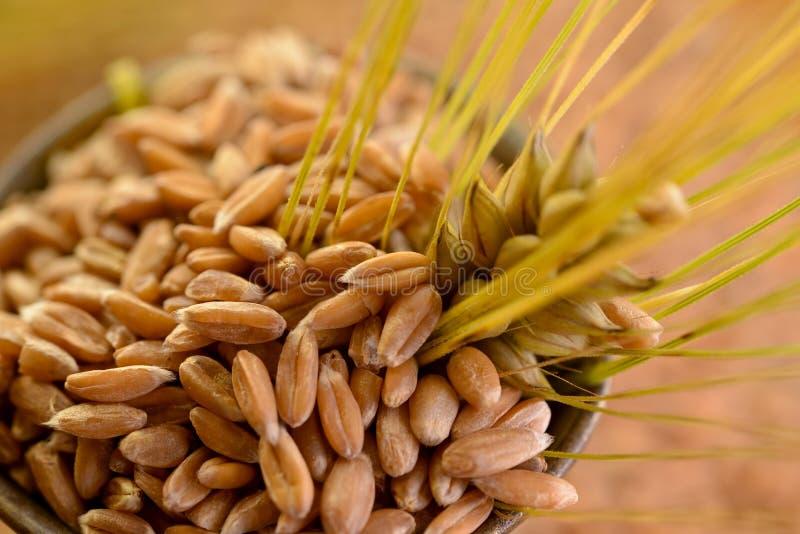 Weizen des Kornes lizenzfreie stockfotografie