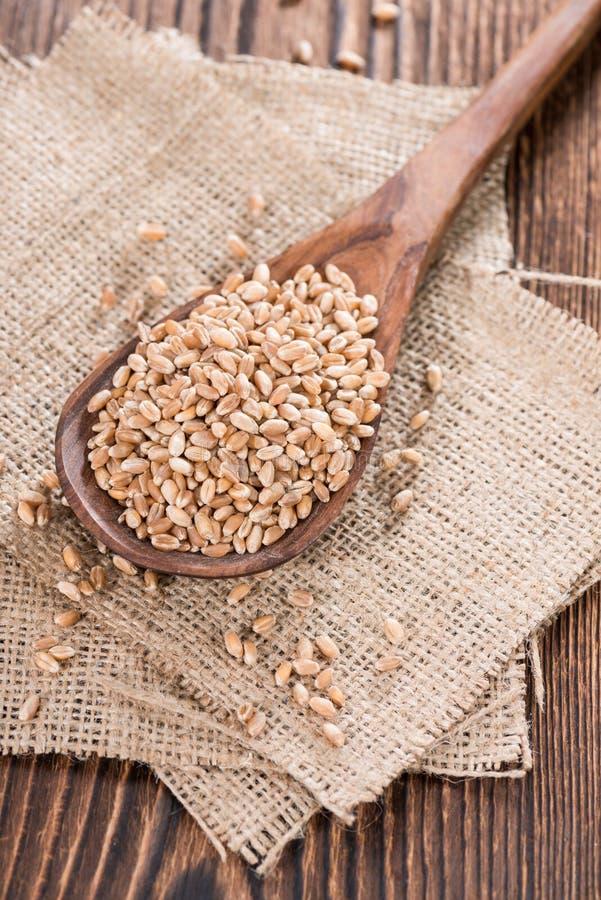 Weizen-Körner lizenzfreies stockfoto