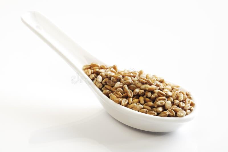Weizen-Körner stockfoto