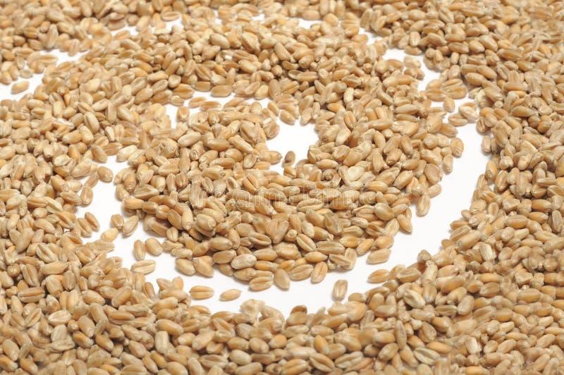Weizen-Körner mit Spirale lizenzfreie stockfotografie