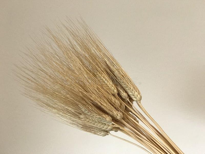 Weizen pirscht goldenen Shavuot-Feiertagshintergrund an lizenzfreies stockfoto