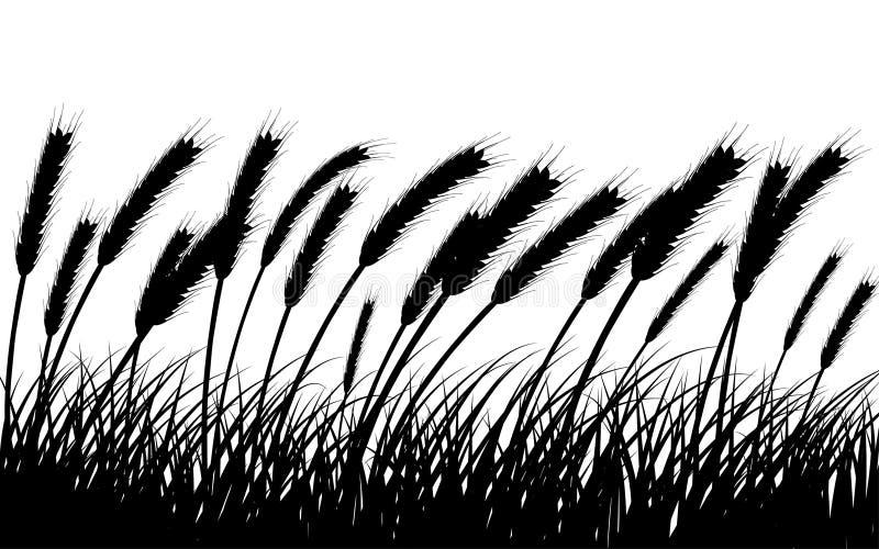 Weizen und Gras lizenzfreie abbildung