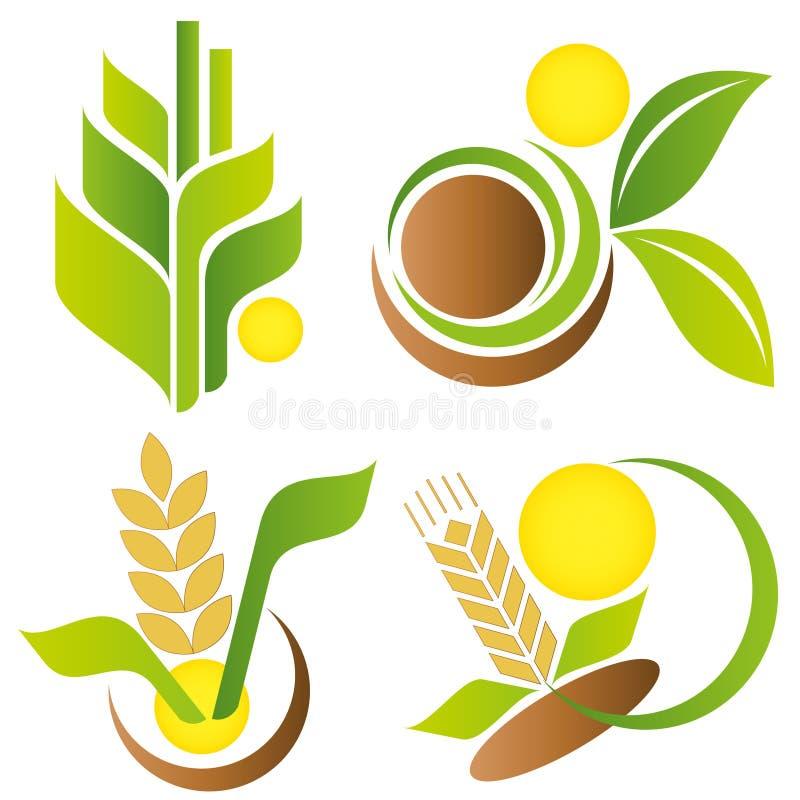 Weizen und Mais Elemente für Auslegung lizenzfreie abbildung