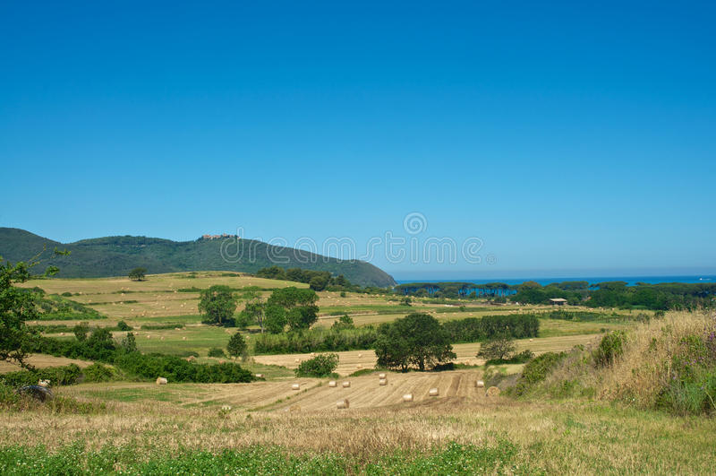 Weizen und Meer lizenzfreies stockfoto